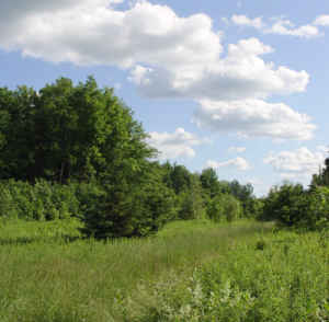 $55000 50.9 acres of wooded land